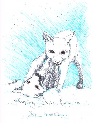 Bild tierzeichnungpolarfuchs-png