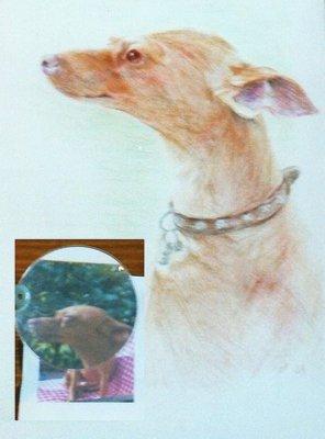 Bild tiere-zeichnung-122-jpg
